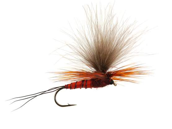 H-Dun Parachute - Brown-Reddish