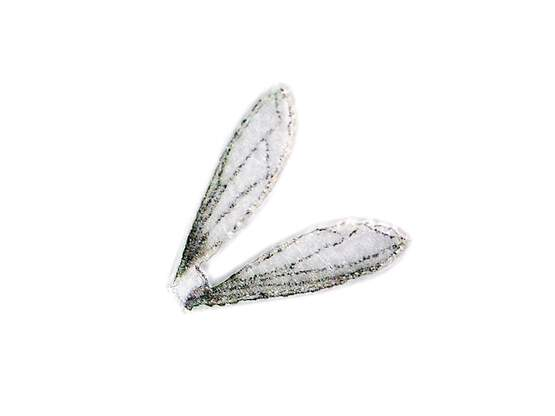 X-TRUE TERRESTRIAL WINGS hotfly - 10 pc.