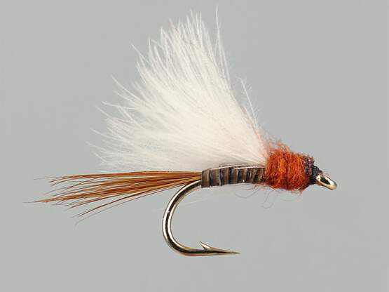 CDC Quill Brown